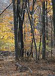 Ginny Christensen seen exploring the Esopus Bend Nature Preserve in Saugerties, NY, on Thursday, November 10, 2016. Photo by Jim Peppler; Copyright Jim Peppler 2016.