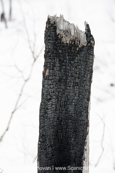 Remnants of a burnt forest along the Kancamagus Highway in the White Mountains, New Hampshire USA during the spring months