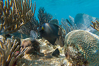 Crystal clear underwater scenes from Laughing Brid Caye National Park,  a small isle 11 miles off the coast of Belize