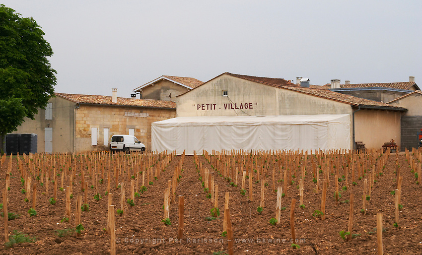 Chateau Petit Village winery and its vineyard with young newly planted vines  Pomerol  Bordeaux Gironde Aquitaine France