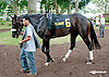 Miss Lamour before The Forever Together Stakes at Delaware Park on 9/11/13