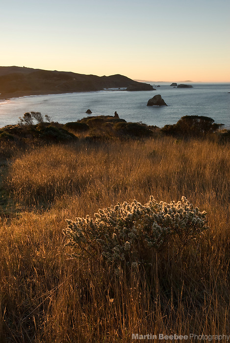 Coastal bluff along the Sonoma County coast, California