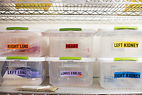Boxes of labels for different organs, including hearts, lungs, and kidneys, stand on a shelf in a supply room at the New England Organ Bank, an organ procurement organization based in Waltham, Massachusetts, serving the greater New England area.
