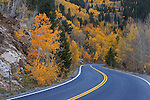 Autumn colors along the road to mount evans in the colorado rockies, USA