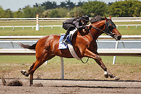 #50Fasig-Tipton Florida Sale,Under Tack Show. Palm Meadows Florida 03-23-2012 Arron Haggart/Eclipse Sportswire.
