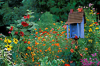 Rustic birdhouse painted bright blue livens up blooming summer multi-colored garden, Midwest USA