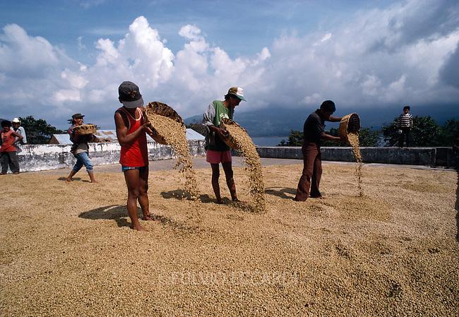 Guatemala, San Pedro La Laguna, Lake, Atitlan, coffee, coffea, organic, beans, process, dry, patio, worker, men, man, spread