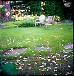 flowers and vintage chairs in a garden in the Pacific Northwest
