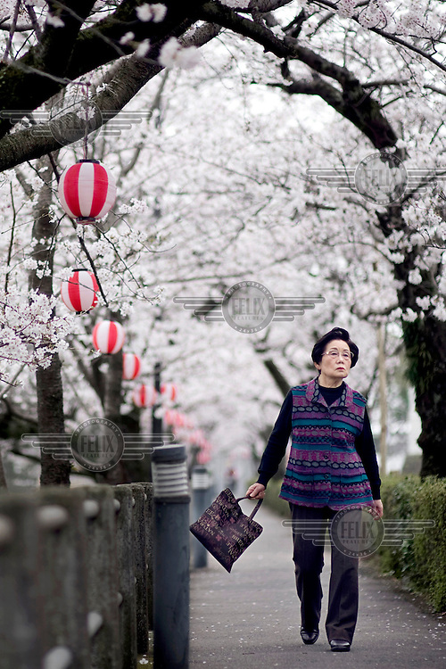 A woman walks along a path shrouded by cherry blossom trees and a string of paper lanterns. /Felix Features