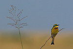 Balance of flora on one side and a little bee eater bird on the other.
