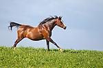 20110821 J's Arabians