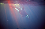 Norway Swimming with killer whale