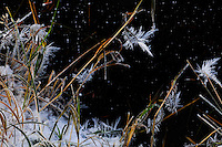 """ICE BLOOMS AT MIDNIGHT""<br />