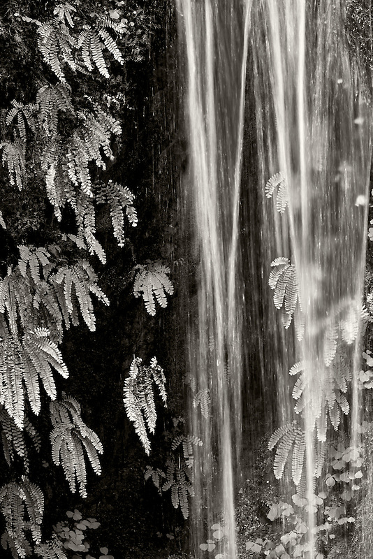 Seasonal waterfall into Tanner Creek with ferns. Columbia River Gorge National Scenic Area, Oregon