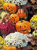 GIORDANO, STILL LIFE STILLLEBEN, NATURALEZA MORTA, paintings+++++,USGI2741M,#I# pumpkins