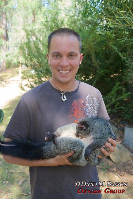 Chris Tilton Holding Mountain Brushtrail Possum