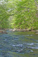 Ken Lockwood Gorge, south branch of the Raritan River,New Jersey Wildlife Management Area, Piedmont Region,  Hunterdon County, New Jersey