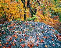 Rocky ledge, Roaring River State Park, Missouri, Afternoon, October
