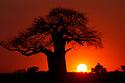 Africa: Plants, Habitats & Landscapes