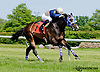 Kathy's Kitten winning at Delaware Park on 6/5/13