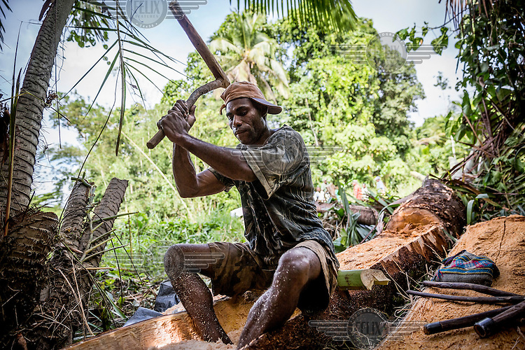 Geoffrey Swindu, 30, extracting the core from sago palm to make a traditional 'sak sak' meal. Geoffrey claims that many sago palm trees died after a logging company started working near his village of Koptui.