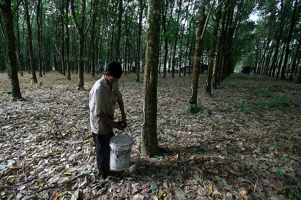At first light, Tin Tin's family collects the rubber tree sap in large tubs.<br /> <br /> Like migrant communities all over the world, the Burmese in Thailand are often reviled by their hosts. as lazy, dirty and dishonest. The truth, as always, is completely different.