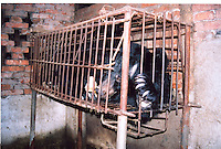 """Bear was found in the Bear Farm in Chengdu, Sichuan, China. The rescue was conducted by Animals Asia Foundation. The foundation rescued 28 """"moon"""" bears from horrendous bea-bile farms in the area. Animals Asia is run and founded by UK national Jill Robinson, M.B.E."""