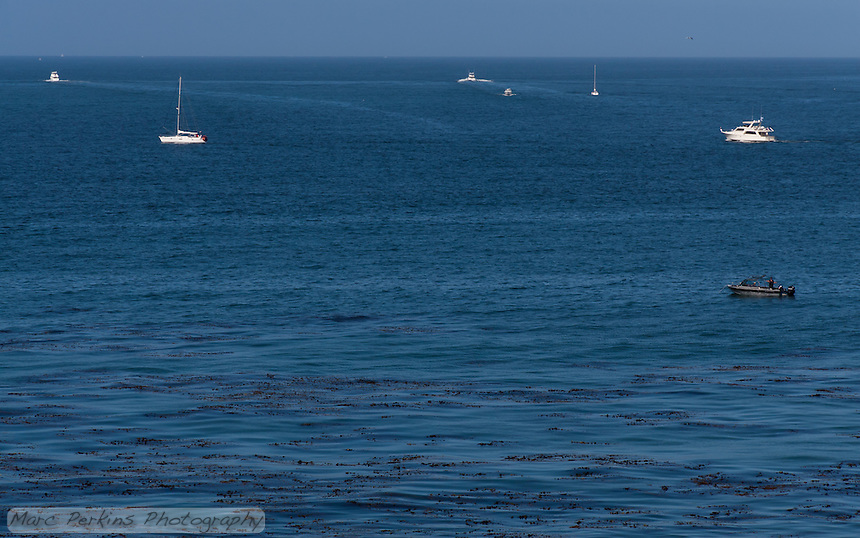 A number of boats (sailboats and motor boats) depart Newport Harbor early one morning.  Seen from the bluffs above Little Corona beach in Corona Del Mar.