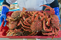 Royaume-Uni, îles Anglo-Normandes, île de Guernesey, Saint Peter Port: Araignées de mer chez  Andy Le Prevost, Seafresh Guernesey -  Poissonnier , Pêche locale de de Guernesey<br /> // United Kingdom, Channel Islands, Sea spiders , Andy Le Prevost, Seafresh Guernsey - Guernsey's Only Traditional Fishmonger