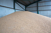 Grain stored in a farm building <br /> &copy;Tim Scrivener Photographer 07850 303986<br /> ....Covering Agriculture In The UK....