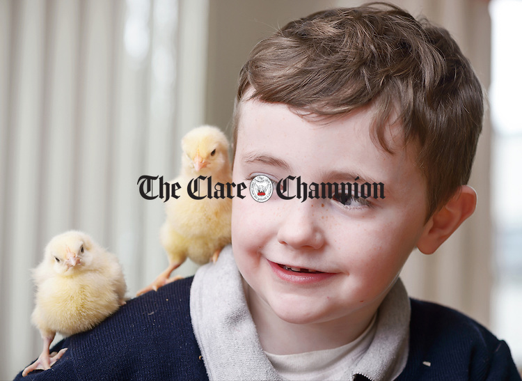 Pirate In The Making.........Junior Infant Paddy shoulders some young chicks in Mrs. Mc Geary's class during the Hatch For Schools project at St Flannan's National School, Inagh. The project involves the class rearing chicks from hatching through to two weeks old in their school and is part of the Science Strand of Caring For Living Things and Life Cycles programme. Photograph by John Kelly.