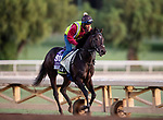 OCT 29: Breeders' Cup Juvenile Turf Sprint entrant Dream Shot, trained by James Tate, gallops at Santa Anita Park in Arcadia, California on Oct 29, 2019. Evers/Eclipse Sportswire/Breeders' Cup