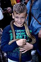 """Children of Cocullo with snakes in hand before the procession.The feast of snakes. Process dedicated to the Saint Dominic, in the streets of Cocullo, in the Abruzzo region, Italy on May 1, 2019.<br /> <br /> <br /> <br /> The St. Domenico's procession in Cocullo, central Italy. Every year on the first  of May, snakes are placed onto the statue of St. Domenico and then the statue is carried in a procession through the town. St. Domenico is believed to be the patron saint for people who have been bitten by snakes:<br /> <br /> Italy, Cocullo, in the Province of L'A...quila, is at 870 meters a.s.l., along the railway line connecting Sulmona to Rome. The village rises alongside Mount Luparo (1327 meters) """"The valley opening in front of the village is surrounded by bare rocks, while on the other side, to the south, snow-capped mountain crests follow one after the other...""""<br /> San Domenico Abate lived in the 10th and 11th centuries AD. Born in Foligno, in the Umbria region, he started his pilgrimages, preaching and ascetic practices in Central Italy, making miracles recorded by the word-of-mouth tradition. He died on 22 January 1031 and was buried in Sora.<br /> <br /> Cocullo snake charmers are over with their snake hunting. They proceeded through the During the procession on the first in May, before the snakes are placed all over the statue of St. Dominick, they will be fed with milk kept in containers with crusca. It is the snake that, most of all other elements, expresses an ancestral myth: the unknown aspect and unpredictability of the natural environment with man's innate need to achieve the dominance on his own habitat. <br /> <br /> Snakes and wolves were the emblems of Italic peoples like the Marsians and Irpinians. Some areas in Abruzzo, especially in the Sagittario valley, were under the menace of wolves and snakes, which for the local populations represented the uncertainty and anxiety of their existence that, together with the precariousness and hardships """