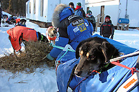 One of Martin Buser's dogs, Patrick, got a ride the last few miles into Anvik. Photo by Jon Little.