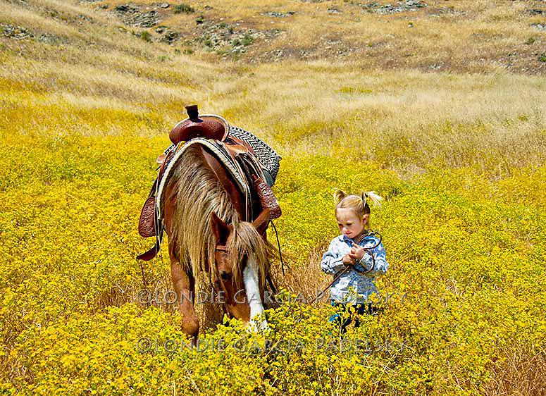 Little girl leading her pony in a mustard field, San Luis Obispo, California