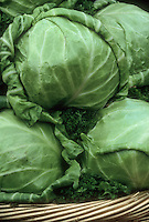 Cabbage Stonehead vegetables picked, several heads  harvested crop in wicker basket
