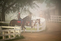 Thoroughbred horse trainers taking horses out for early moring workout, Keeneland race track, Lexington, Kentucky