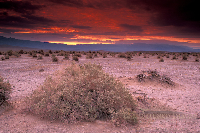 Storm clouds over arrowweed roots in sand at sunrise at Devils Cornfield, Death Valley National Park, California