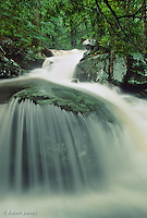 LeConte Creek cascading over boulder after heavy rains, Great Smoky Mountains National Park, Tennessee.