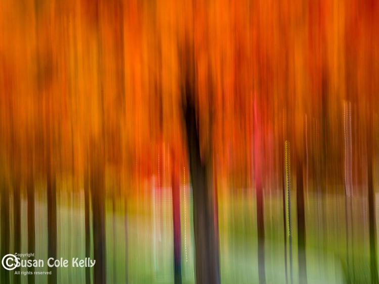 Fall foliage in the park. Boston, Massachusetts, USA