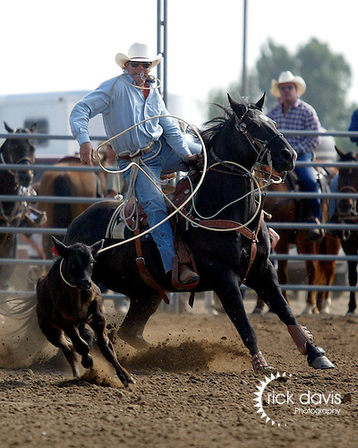 Colorado Pro Rodeo Association cowboy competes in tie down roping.