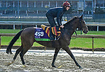 November 1, 2018 : Happily, trained by Aidan O'Brien, trains for the Breeders' Cup Mile at Churchill Downs on November 1, 2018 in Louisville, KY. Jessica Morgan/ESW/CSM