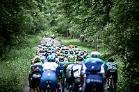 peloton   <br /> <br /> Circuit de Wallonie 2019<br /> One Day Race: Charleroi – Charleroi 192.2km (UCI 1.1.)<br /> Bingoal Cycling Cup 2019