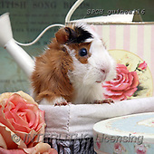 Xavier, ANIMALS, REALISTISCHE TIERE, ANIMALES REALISTICOS, photos+++++,SPCHGUINEA116,#A#, EVERYDAY ,funny