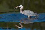 Wading Birds & Kingfisher