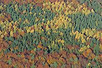Herbstwald:DEUTSCHLAND, SCHLESWIG- HOLSTEIN 30.10.2005:Sachsenwald,  Laubbaeume, Laubwald, Mischwald, Herbst, Laubfaerbung