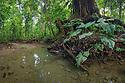 River running through dense lowland rainforest. Corcovado National Park, Osa Peninsula, Costa Rica, May.