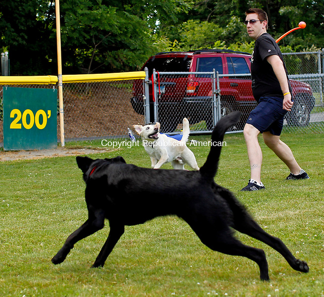 Middlebury, CT-02, July 2010-070210CM01 Matt Correia of Middlebury, launches a tennis ball to his 2 year old Lab mix, Cody, Friday afternoon at Quassy Field in Middlebury.  They were playing catch with long time friend, Natalie DiVirgilio and her pooch, Boomer (foreground), a 18mo old Black Lab mix. Correia and Divirgilio, both teachers said they were enjoying their summer off.  --Christopher Massa Republican-American