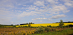 Field of Rapeseed, Luxembourg