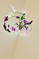 Fantasy planter full of orchids, Delray Beach, Florida